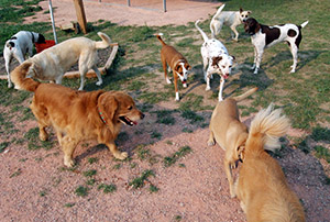 Dogs in play area - Rocky Mountain Kennels in Longmont, Colorado