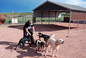 Dogs in play area with handler - Rocky Mountain Kennels in Longmont, Colorado